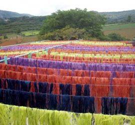 Actividades Ecofibras 2008