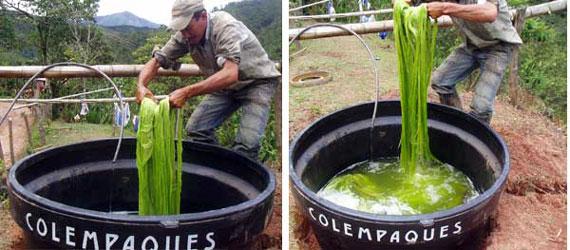sostenibilidad-ambiental-ecofibras-aguas-limpias